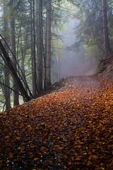 Pany (qitsuk) Tags: autumn fall leaves weather fog forest schweiz switzerland leaf path foliage trail graubünden grisons pany graubuenden prättigau stantönien luzein praettigau