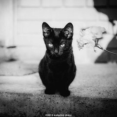 DSC_0168-Edit (Katarina Drezga) Tags: cats pets cute cat feline kittens domesticcat petphotography nikond3100 nikkor55300mm4556gvr