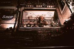 Teddy Bear (HIKARU Pan) Tags: bear night toy photography asia shanghai teddy china1 35l tianzifang canonef35mmf14lusm 1dx eos1dx