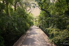 Alameda Santos x Parque Trianon - 2013 (Thales Munhoz) Tags: brasil sãopaulo santos alameda paulista trianon parquetrianon paulistano alamedasantos thalesmunhoz tmunhoz