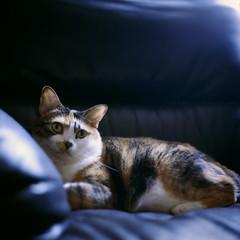 E Meow's life (Steve only) Tags: cats 120 6x6 film zeiss mediumformat 1 kodak hasselblad 400 carl push epson v600 portra f28 128 80mm tessar 1000f 8028 f80mm gtx820 e