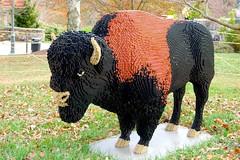 Lego Buffalo (NC Mountain Man) Tags: buffalo nikon lego d70s arboretum ncmountainman phixe