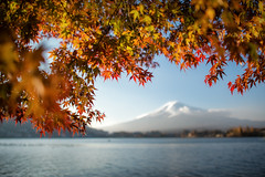 Autumn leaves with Mt. fuji (: : T O N I : :) Tags: travel autumn japan fuji getty
