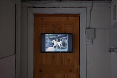 Leanne Hopper (artschoolscottst) Tags: party art theend installation gsa destroy toiletroll thevic glasgowschoolofart checkeredfloor theartschool gsoa theassemblyhall leannehopper