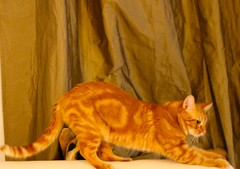 """Cat Stretch • <a style=""""font-size:0.8em;"""" href=""""http://www.flickr.com/photos/89972965@N03/11518481886/"""" target=""""_blank"""">View on Flickr</a>"""