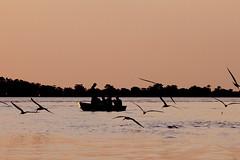 Pescadores Rio Tapajós (Ricardo_ Lima) Tags: brazil tourism brasil fauna viagem turismo guides pará lazer santarem culinária rotas amazônia destinations navegação destinos amazônica paisaem worldcup2014