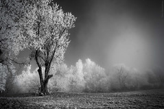 In all things... (somnium_ars) Tags: winter blackandwhite bw plants snow tree nature monochrome fog forest mono austria woods frost december branch foggy frosty spooky