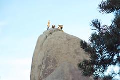 Joshua Tree climbers (aerocott) Tags: california rock d50 climb nationalpark nikon joshuatree tiltshift