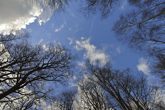 THE SKY'S THE LIMIT (DESPITE STRAIGHT LINES) Tags: she wood morning trees winter woman cloud tree nature girl female digital forest plane countryside fly aperture woods woodlands nikon flickr day alone dof aircraft flight jet iso foliage bark isolation february naturalbeauty contrails awayfromitall mothernature 747 jumbojet gettyimages 737 condensationtrails d800 wooded awayday inthewoods paulwilliams outdoorphotography brasted sunrisephotography silverbird toyshill nikon2470mm nikkor2470mm nikond800 nikongp1 yahooprojectweather despitestraightlines ilobsterit toyshillbrasted toyshillinfebruary toyshillinkent toyshillkent thingstodoinkent