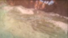 swimming with wild dolphins 2013 (kerstin_meyer) Tags: shark underwater stingray dolphin indigo snorkeling freediving dolphins nurse bahamas bimini deepblue imovie delphin unterwasser stachelrochen gopro spotteddolphin fleckendelphin gopro3