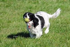 Joy (EJ Images) Tags: uk england dog pet pets slr dogs suffolk nikon canine dslr eastanglia lowestoft 2014 nikonslr d90 nikondslr pakefield nikond90 55300mmlens ejimages dsc1048c