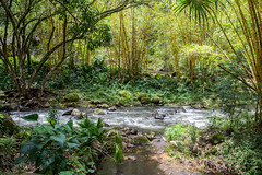 (lkaloti) Tags: green creek geotagged photography hawaii oahu northshore honolulu lightroom waimeavalley canon6d