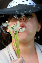 Make a Wish 123/365 (buckbeak888) Tags: blowing blow seeds dandelions makeawish 123365 2014yip