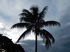 Symbol of the Tropics (mikecogh) Tags: silhouette symbol branches suva palmtree drooping tropics