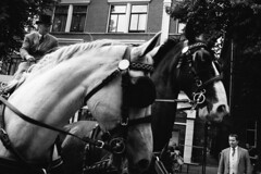 Vrouwen studentencorps lustrum Utrecht. (Pim Geerts) Tags: street white black art 35mm canon photography eos utrecht zwartwit sigma corps series domplein studenten vrouwen paarden carriages 2014 lustrum uvsc vereniging hordes straatfotografie koetsen utrechts usvc usvs 5dm3 pimg8618