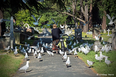 The 'Bird Lady' of Bournemouth. (Lindsey_H) Tags: seagulls feedingthebirds birdlady