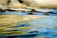 Flight and flow (carogray1) Tags: ocean california blue camping sea seascape painterly motion blur beach water birds golden rocks pacific flight bigsur hike birdsinflight panning highway101 textured willets silkywater nikon70200