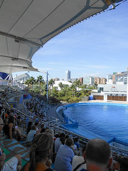 Dolphinarium (Going to the Zoo with Trebaruna) Tags: valencia zoo aquarium spain oceanografic loceanografic loceanograficvalencia aquariumvalencia