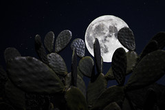 The Sicilian's Super Moon (Cristiano Drago) Tags: cristianodrago canon 650d luna moon super supermoon superluna superluna2016 supermoon2016 ilobsterit national nationalgeographic fichi fichidindia prickly pear pricklypear sky cielo notte night dark buio oscura oscurit oscuro darkness doubleexposure doppiaesposizione