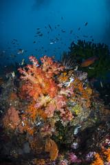 DSC_1999 (Mgungen) Tags: underwater underwaterphotography colourful nikon d7100 subal tokina 1017 inon z240 indonesia rajaampat diving scuba wideangle sea ocean coral reef misoolecoresort