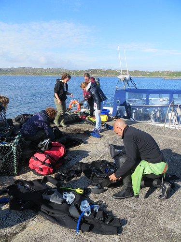 Coll - basking shark trip