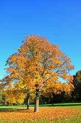 DSC_0072 (florian.glechner) Tags: herbst bume pichlingersee bltter autumn oktober natur farben colors light licht herbstlandschaft farbe herbstfarben trees landscape landschaft see lake himmel heaven wiese grass