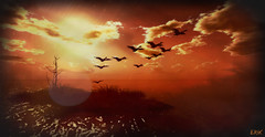 October Morning (erikmofanui) Tags: secondlifephotography secondlife secondlifelandscape sunrise colors geese fall waterfowl