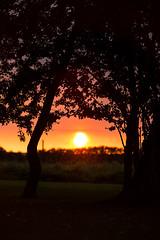 Solnedgang (Kent 40D) Tags: solnedgang have træer sol aften hjemme skuderløse silhouet skygger