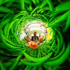 Always keen for green beans!  #lifein360 (LIFE in 360) Tags: lifein360 theta360 tinyplanet theta livingplanetapp tinyplanetbuff 360camera littleplanet stereographic rollworld tinyplanets tinyplanetspro photosphere 360panorama rollworldapp panorama360 ricohtheta360 smallplanet spherical thetas 360cam ricohthetas ricohtheta virtualreality 360photography tinyplanetfx 360photo 360video 360