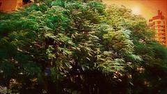 Wind on the tree (Cleide@.) Tags:  cleide brazil 2016 photo art digital ps6 texture filters tree wind sunset artdigital exotic netartii sotn awardtree