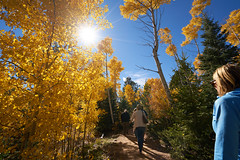 Autumn in Santa Fe (Sagra-KS) Tags: a7rii santafe newmexico autumn aspen fallfoliage forest yellow poplar leaf tree park cottonwood wood southwest landscape travel