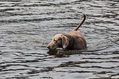Tiere_Hunde_16042015_Sky und Sarah_015 (rincewind1111) Tags: hunde kochelsee skyundsarah tiere dog dogs hund