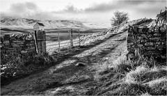 Forest in Teesdale . (wayman2011) Tags: fujifilmxt10 lightroom wayman2011 bwlandscapes mono winter snow gates tracks pennines dales teesdale forestinteesdale countydurham uk