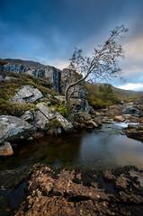 Tree in Motion 2 (samueljohnkerr) Tags: scottish scotland scottishlandscape glencoe