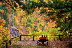 The Couple (Explored) (Sarah Sonny) Tags: couple outdoors nature scenery fall autumn foliage leaves trees bench woods forest love