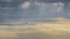 . (Cristhian Keppert) Tags: patos landscape paisajes cristhiankeppert sky cielo ocaso atardecer