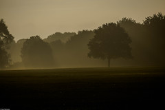 Autumn morning mist (Vagabundina) Tags: germany hamburg autumn morning mist sunrise nature park stadtpark trees mystical nikon d5300