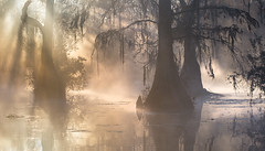 Primeval (Appalachian Hiker) Tags: cypress tupelo sunrise light rays sunrays beams swamp glow