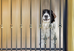 behind bars.. (silviu_z) Tags: nikon d810 silviu zlot dog dogs animals garden nature city bars outdoor 2485 beautiful