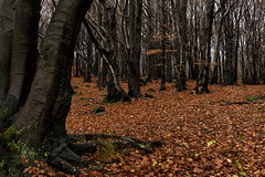 Nella_sua_semplicità (Danilo Mazzanti) Tags: danilo danilomazzanti mazzanti wwwdanilomazzantiit fotografia foto fotografo photography photos bosco autunno coloriautunnali faiallo alberi fogliesecche foglie