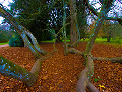 The Trees have fallen (RS400) Tags: tree cool wow willtshire autumn olympus landscape novermber trees leaves wicked southwest westonbirt arboretum
