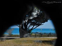 the 4 seasons: été summer (laurek.photography) Tags: pet cat mer see summer ete tup blue passion photography