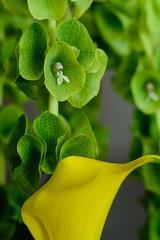 Arranjos florais - Festa Cau50 (Paulo Tebet Photography) Tags: rogéria cau50 arranjos florais