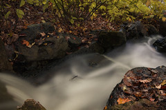 Dividing lines (aerojad) Tags: chicago chicagobotanicgarden fall autumn fallcolors colorful flora leaves leaf waterfall longexposure daytimelongexposure stream water landscape outdoors