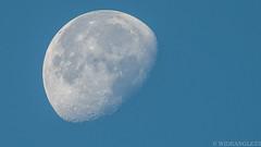 Blue moon (Wideangle55) Tags: 300mm sanjoaquinmarsh wildlifesanctuary sanjoaquinmarshwildlifesanctuary wideangle55 nikon d800 blue nikontc20eiii doubler bluemoon moon