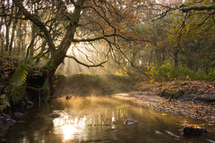 Mist On The Brook (Rob Pitt) Tags: rivacrevalley mist autumn ellesmereport water morning light