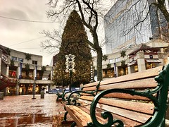 Boston - Quincy Market Christmas Tree. (Polterguy30) Tags: emptiness benches bench christmastree christmas quincymarket massachusetts boston
