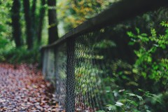 (RL Mulholland) Tags: hff fence friday dof 50mm f14 canon 6d colour bokeh forest park walk ireland