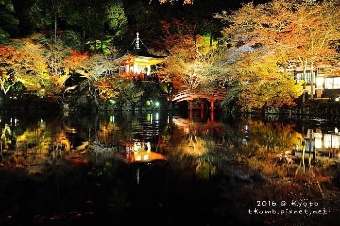 2016醍醐寺夜楓5.JPG