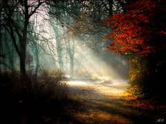 This morning was magical 2 (Hetty S.) Tags: light sun rays forest park wood trees nature zonneharpen natuur bos magical magisch winter holland hs hetty hettys